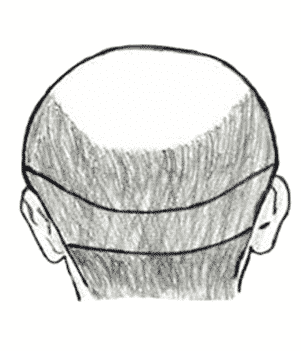 sciencebald